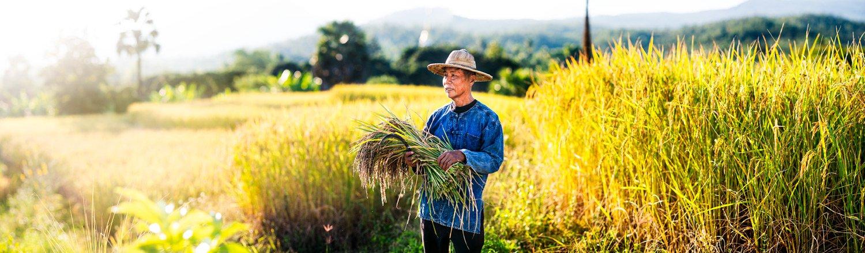 Portfolio of KevinLJ © Kevin Landwer-Johan Rice Farmer Pano Thailand